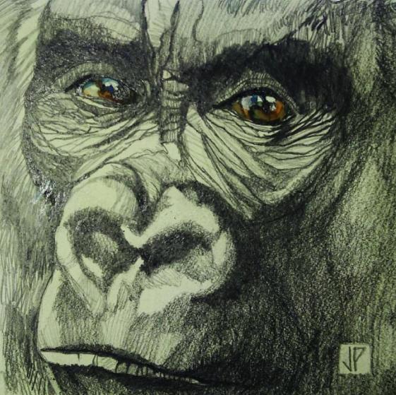 alma-animal-2